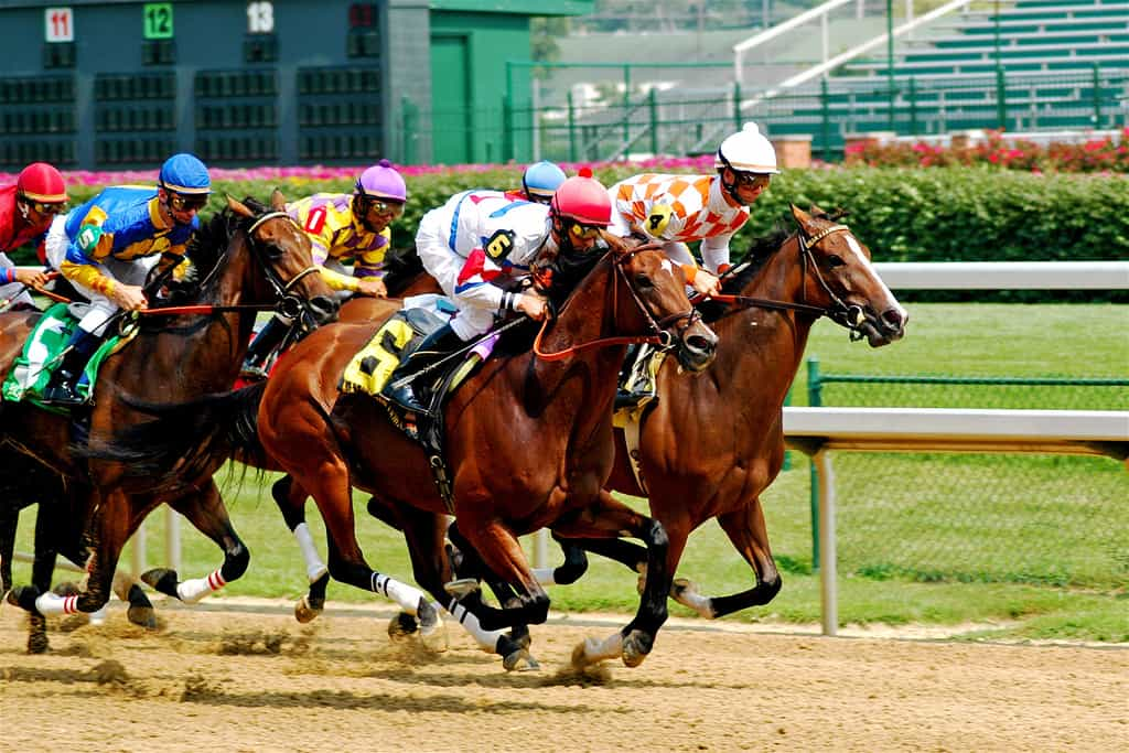 horse racing on dirt